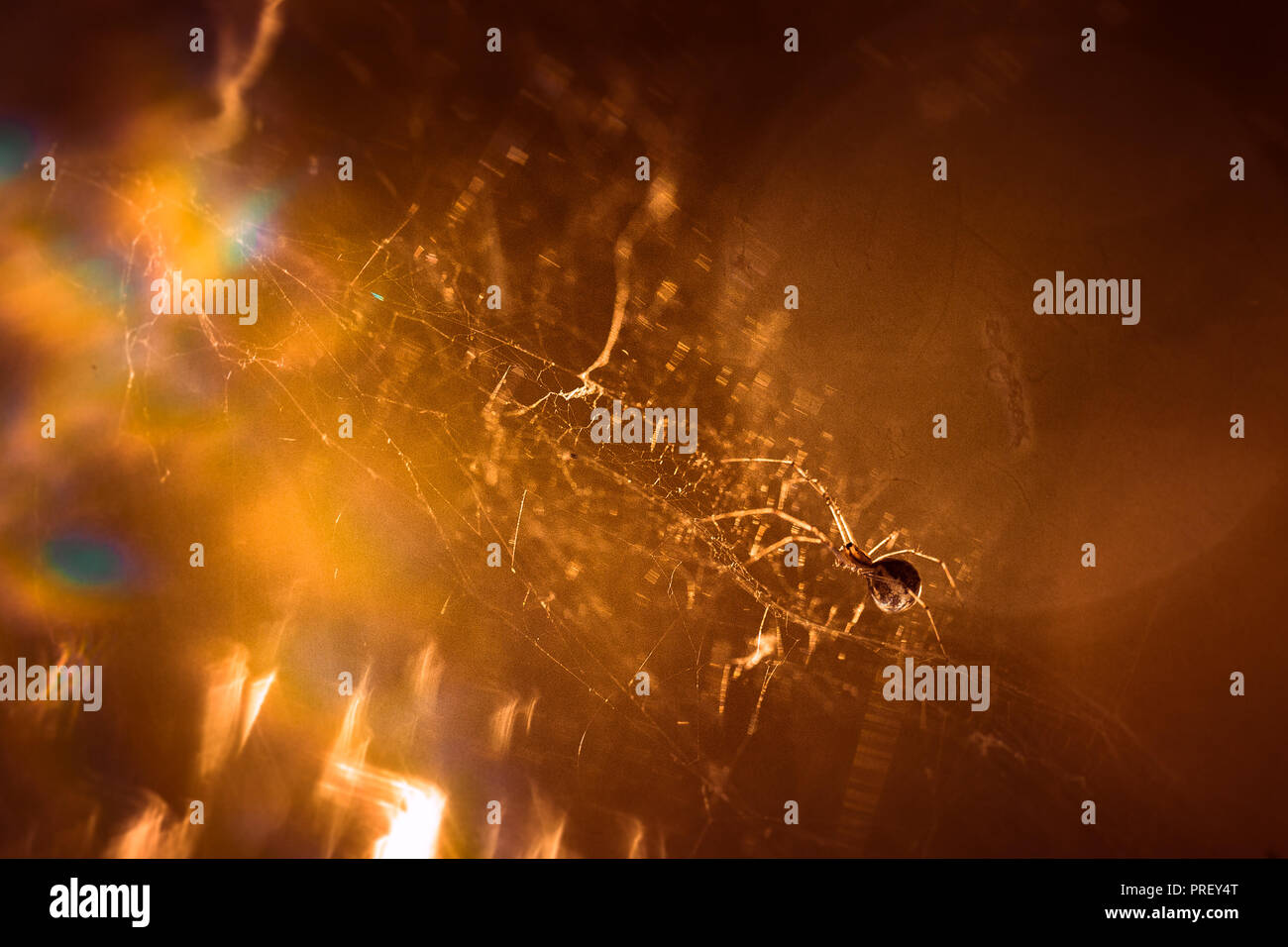 spider is sitting on a cobweb close-up. - Stock Image
