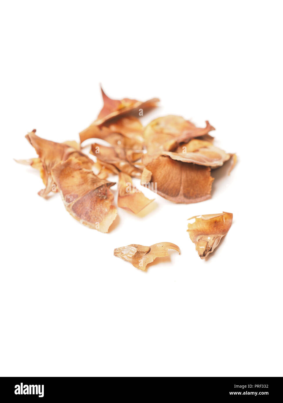 Seeds of a nordmann fir tree on a white table - Stock Image