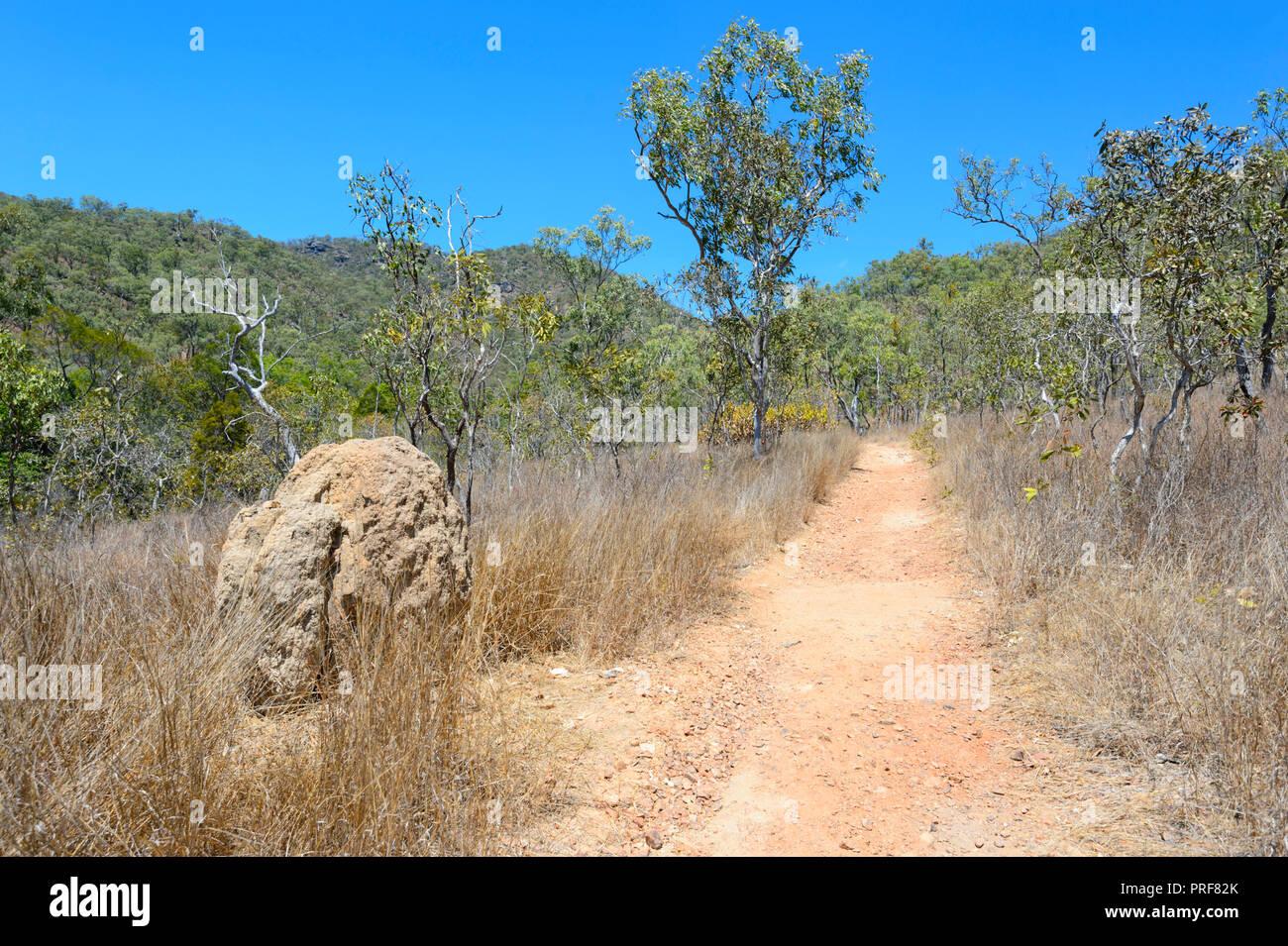 Walking trail with a termite mound in bushland, near Mareeba, Far North Queensland, FNQ, QLD, Australia - Stock Image