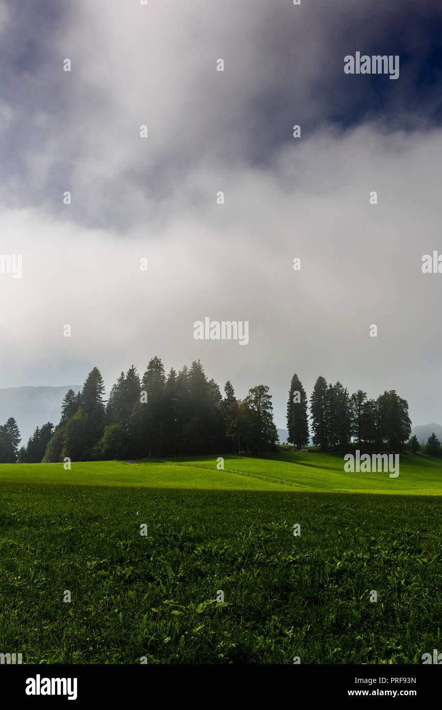 Grüne Landschaft, Wald & Wiese im Nebel,  morgentliche Stimmung, Landidylle, Bayern, Deutschland - Stock Image