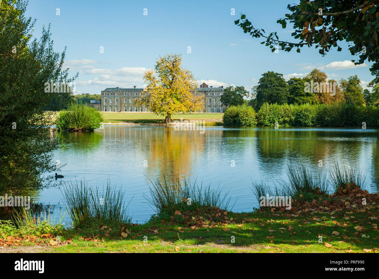 Summer afternoon at Petworth Park, West Sussex, England. - Stock Image