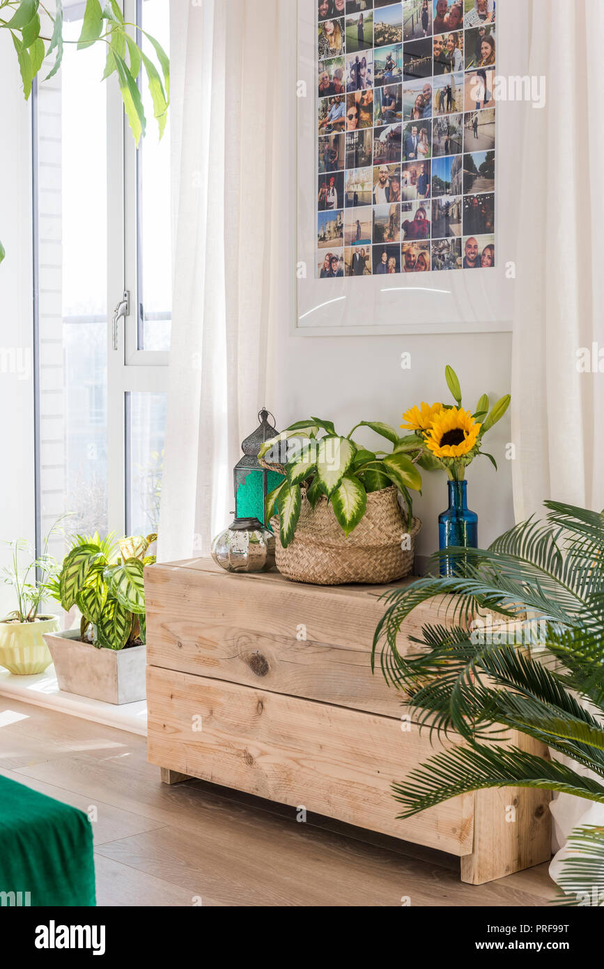 Photos above houseplants and sunflowers in London apartment - Stock Image