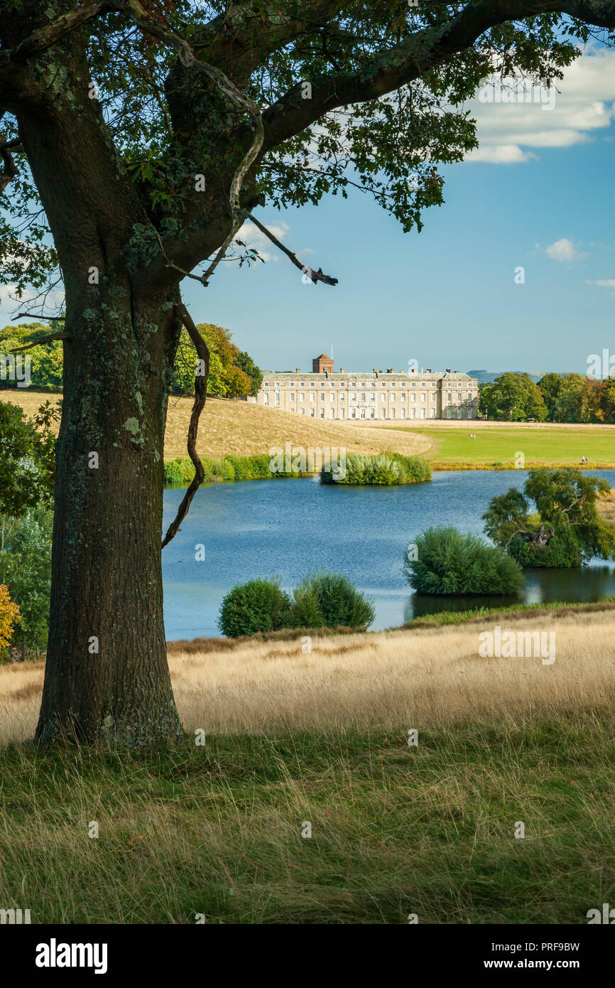 Afternoon in Petworth Park, West Sussex, England. - Stock Image