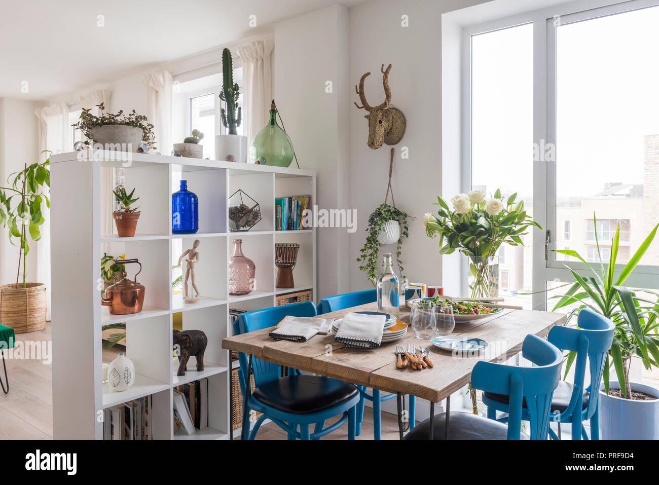 Blue painted chairs at scaffold board dining table with shelving as room divider - Stock Image