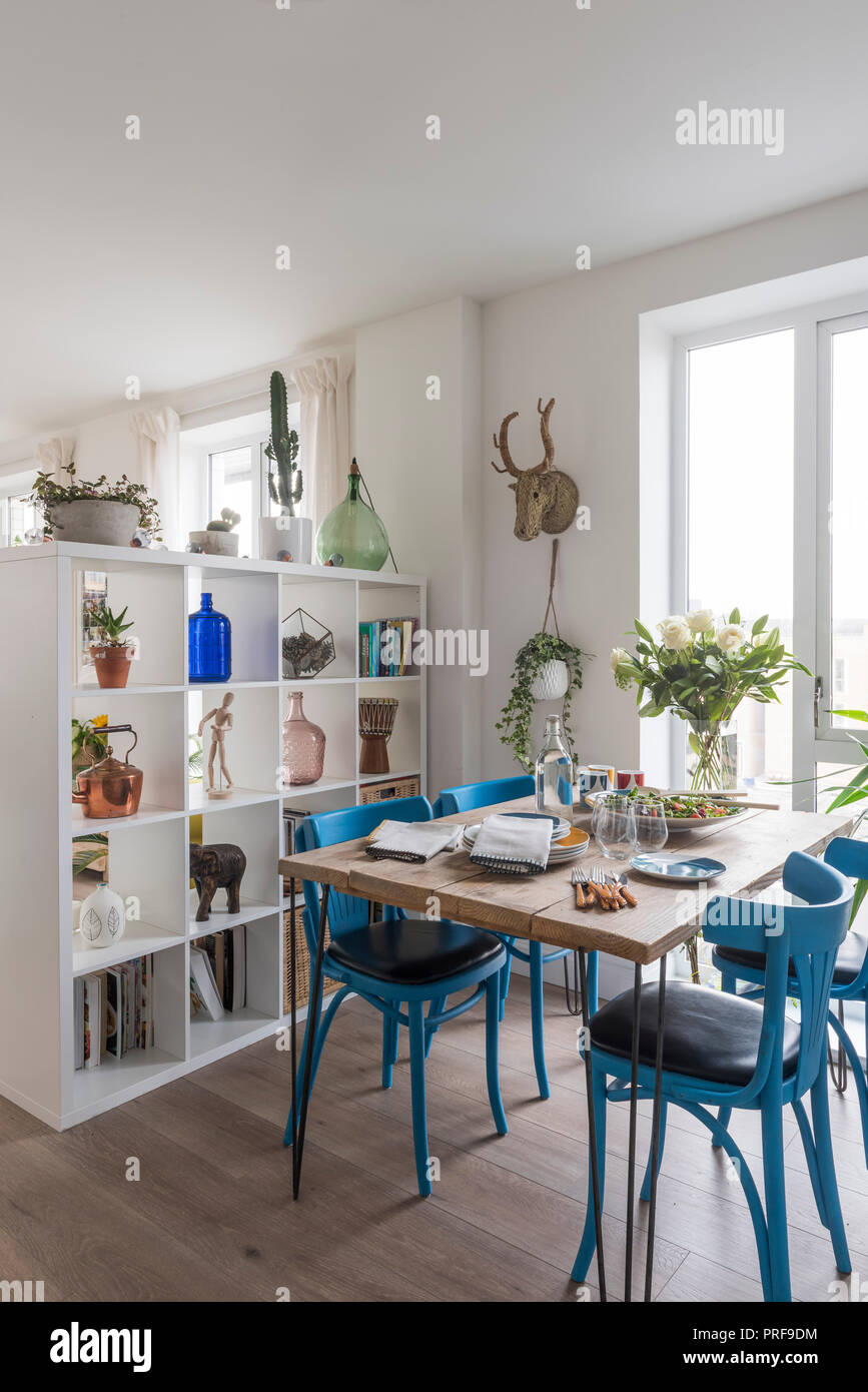 Blue painted chairs with scaffold board dining table and shelving unit - Stock Image
