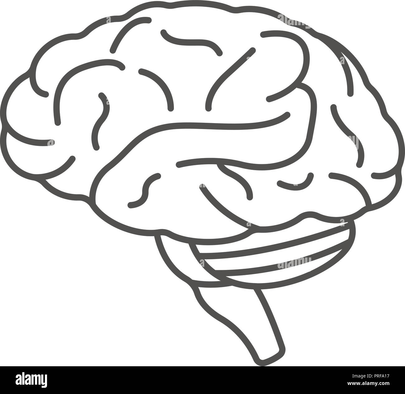 human brain icon outline style stock vector image art alamy https www alamy com human brain icon outline style image220998659 html
