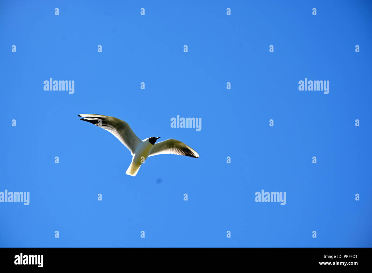 Möve  Himmel   Meer    Hintergrund - Stock Image