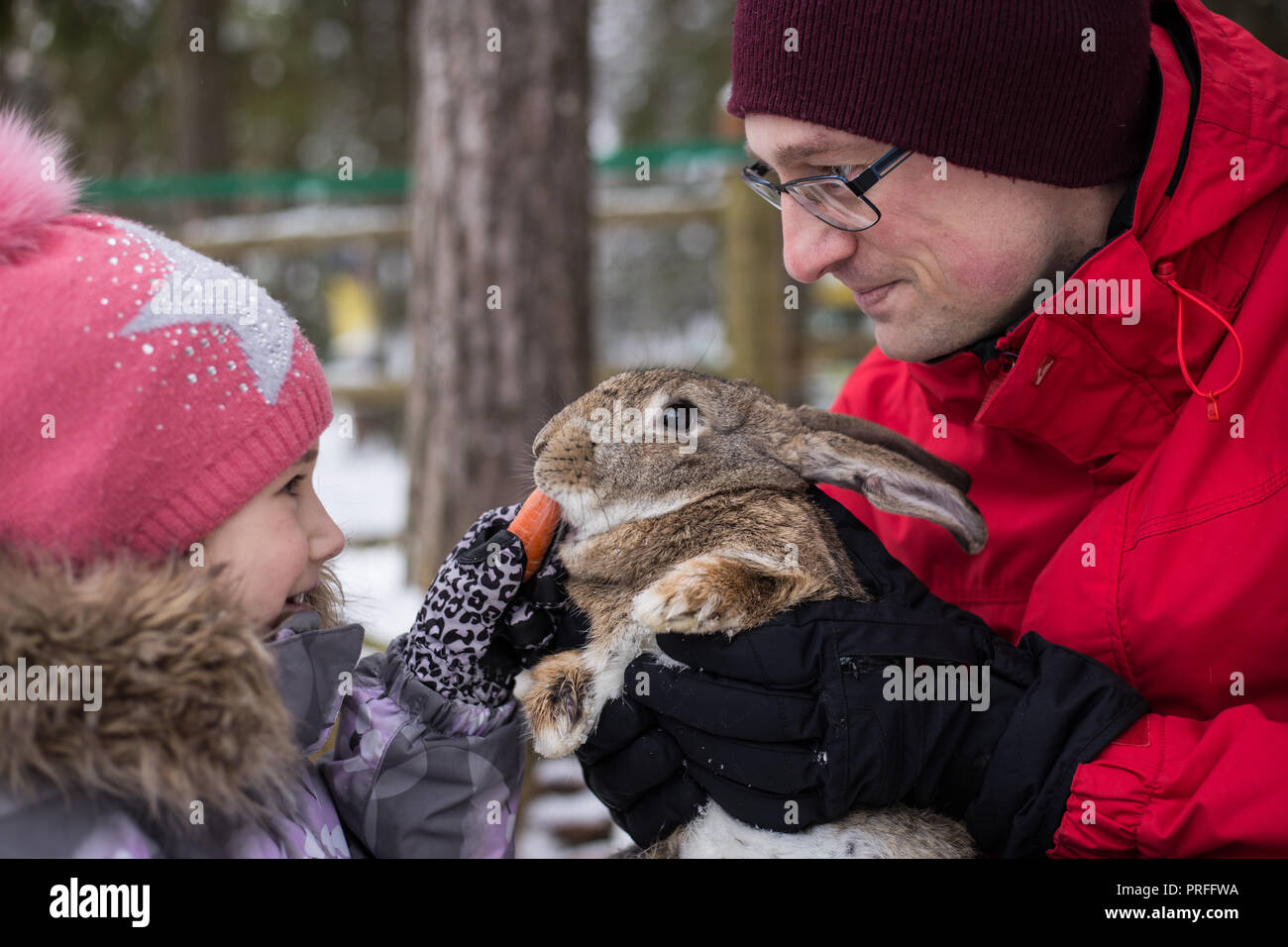 Father and cute little daughter in a pink cap playing with a grey rabbit - Stock Image