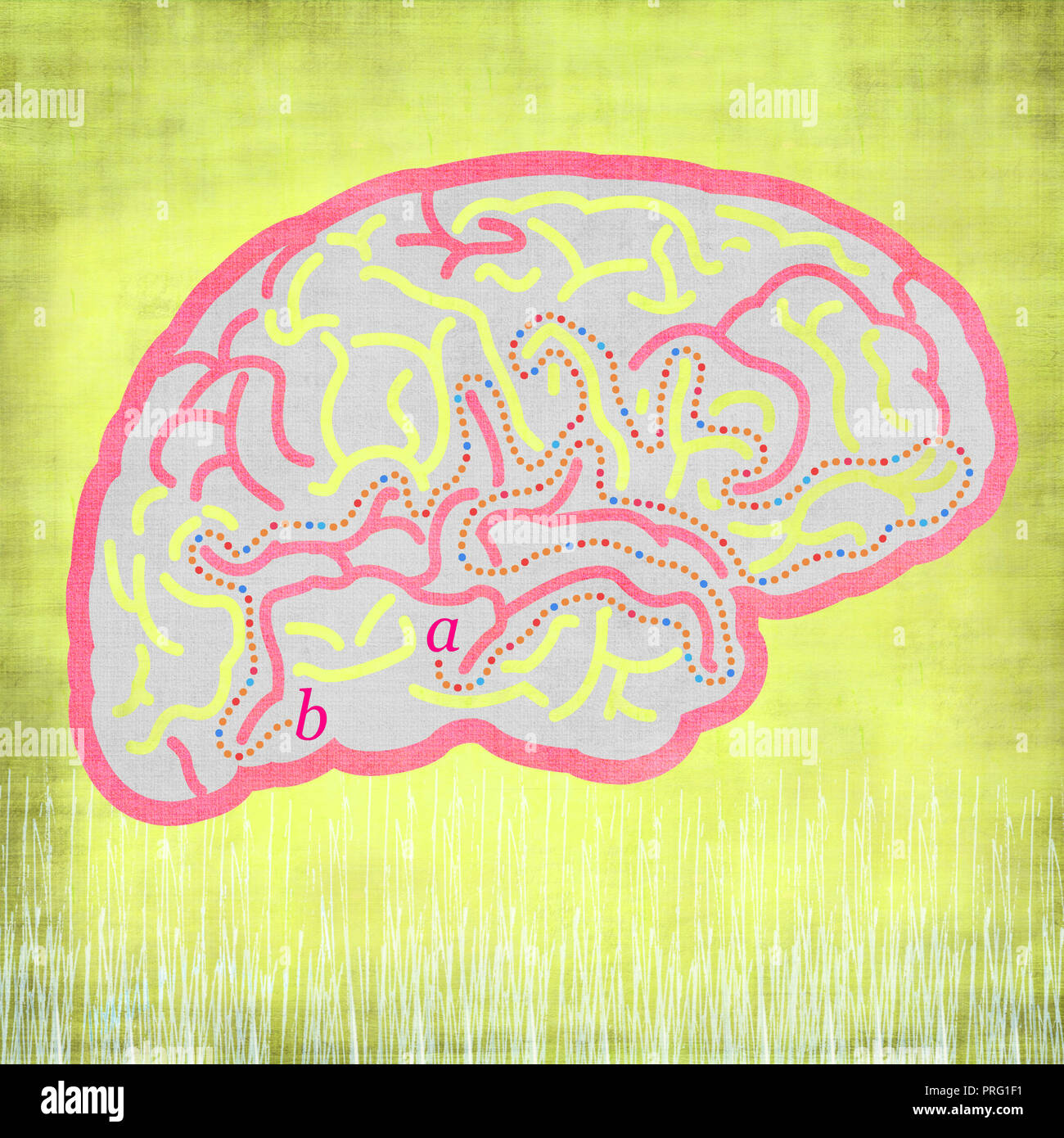 brains with characters - Stock Image