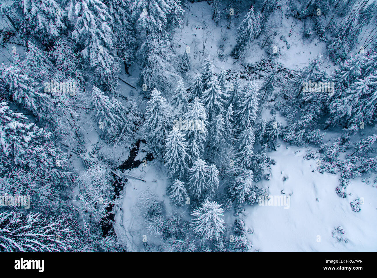 Aerial view of snow covered pine forest in Switzerland. Stock Photo
