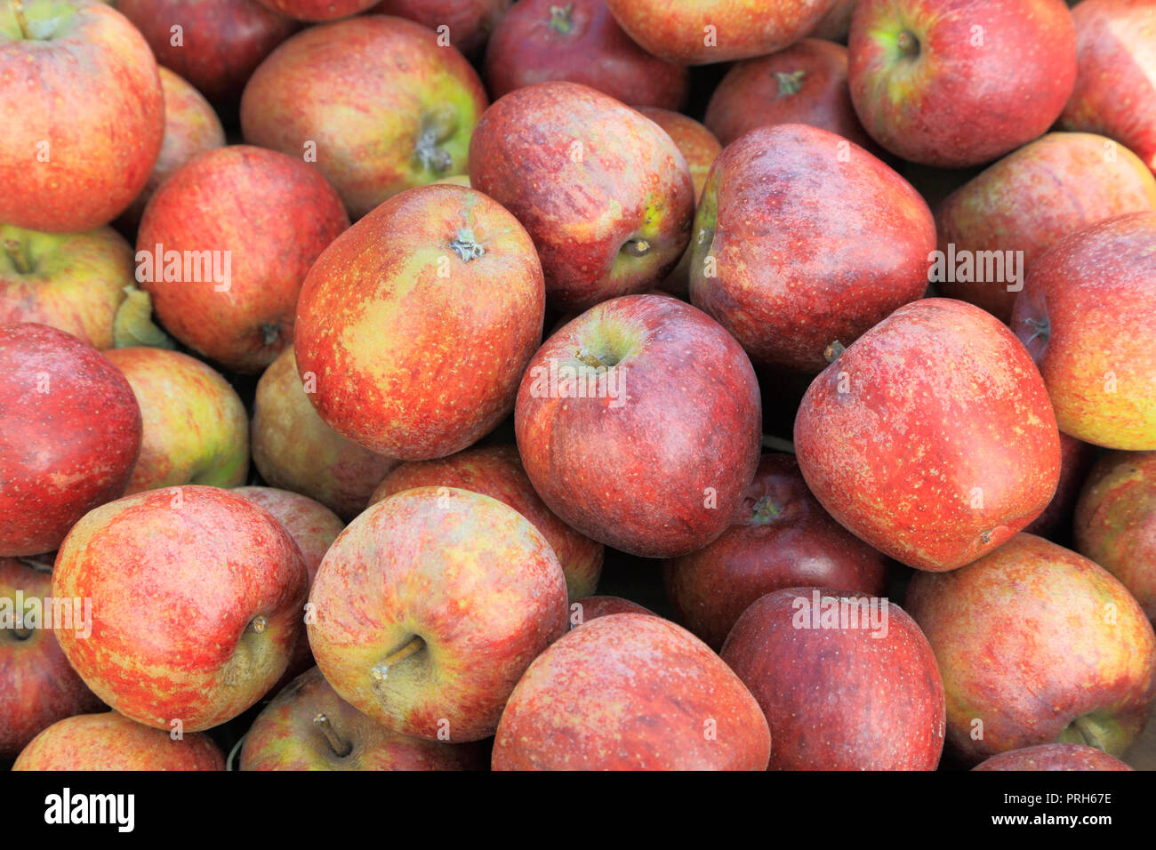 Apple 'River St. Martin', apples, malus domestica, farm shop, display, edible, fruit - Stock Image