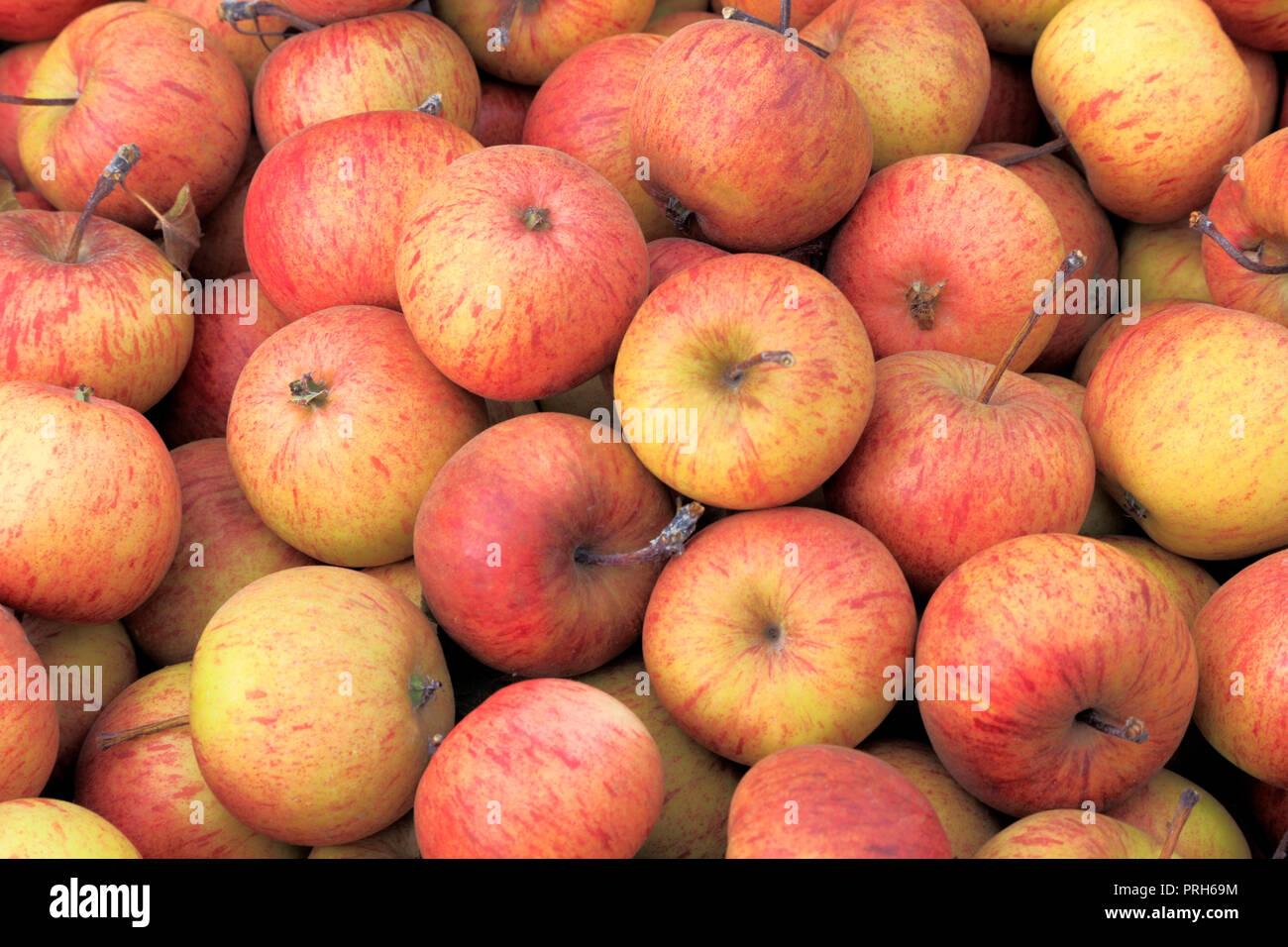 Apple, apples, 'Epicure', malus domestica, farm shop, display, edible, fruit - Stock Image