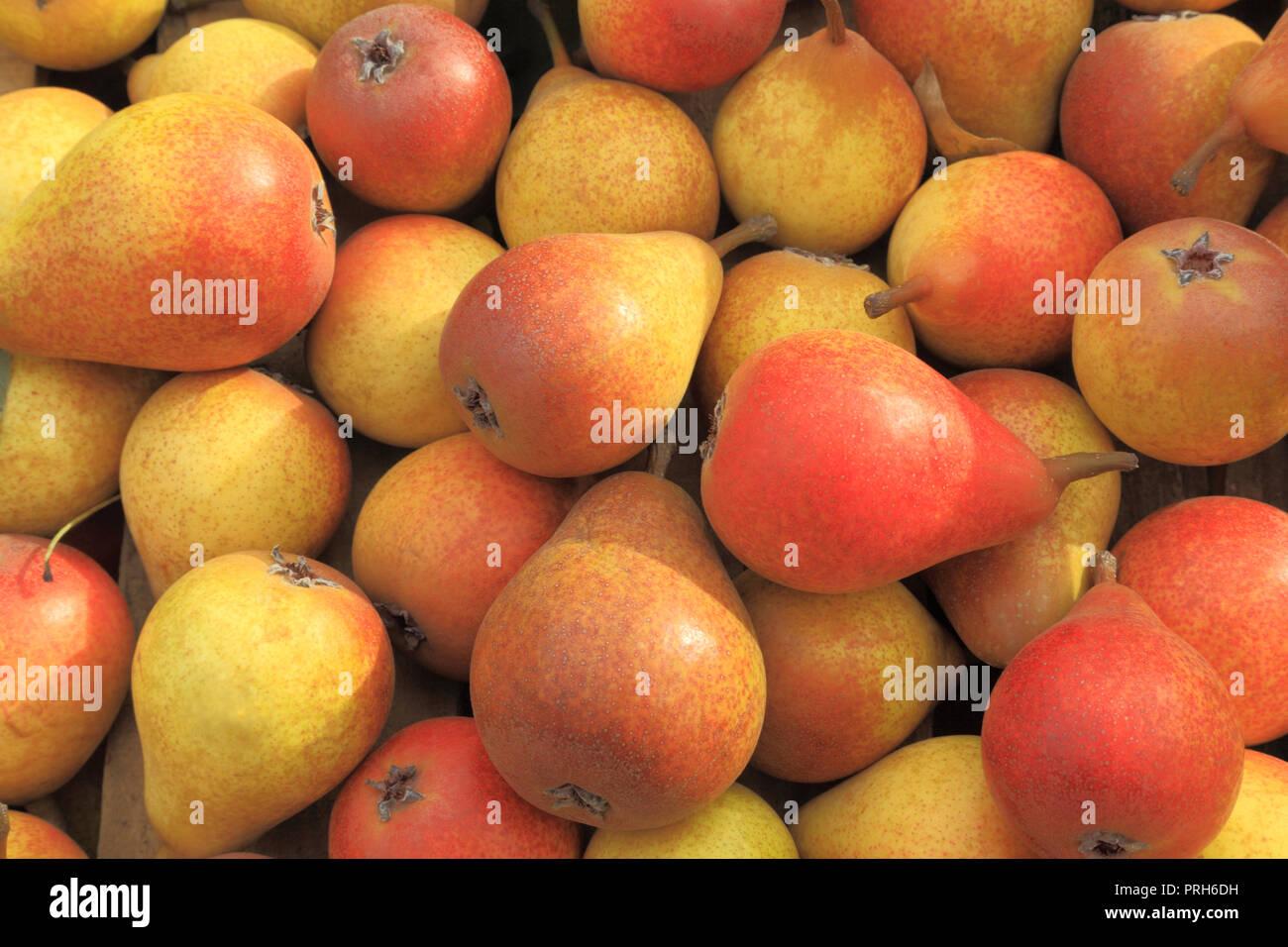 Pear, 'Robin', pears, pyrus, farm shop, display, edible, fruit - Stock Image
