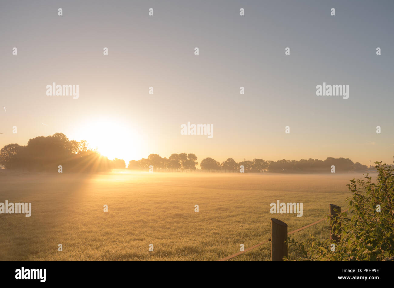 Gold shimmer of the morning sun in the country. Location: Germany, North Rhine - Westphalia, Borken - Marbeck - Stock Image