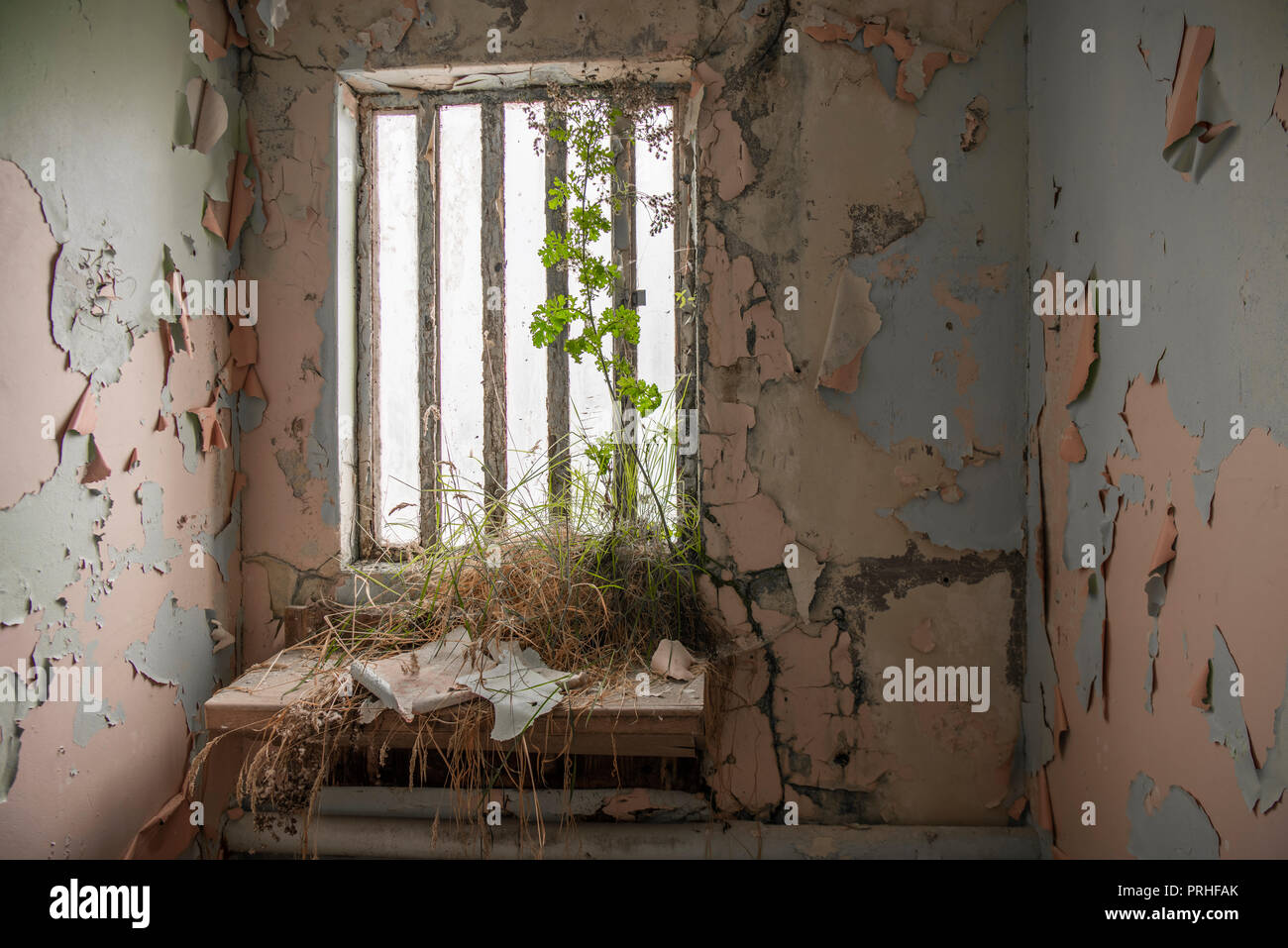 Weeds growing inside a prison cell at an abandoned prison. - Stock Image