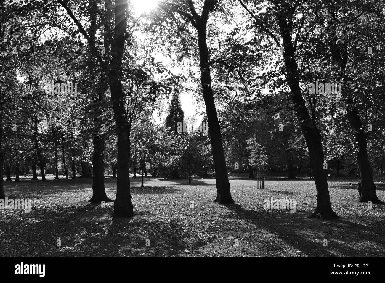 Beautiful, naturally lit black and white photographs of Ropner Park, a traditional Victorian public park in Stockton-on-Tees, UK at the start of Autumn. Stock Photo