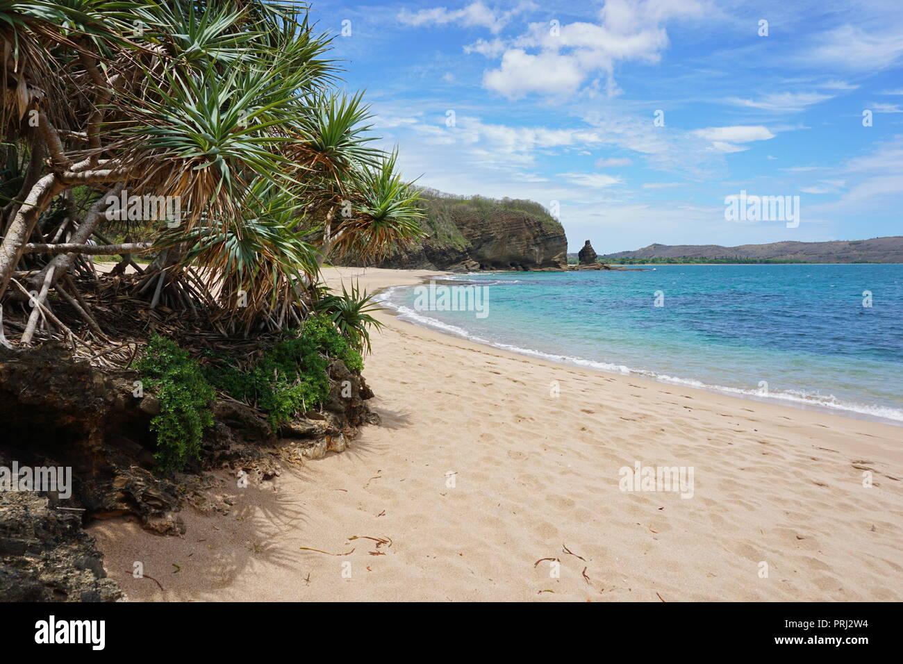 Pandanus on the beach shore in New Caledonia, Bourail, Grande Terre, south Pacific, Oceania - Stock Image