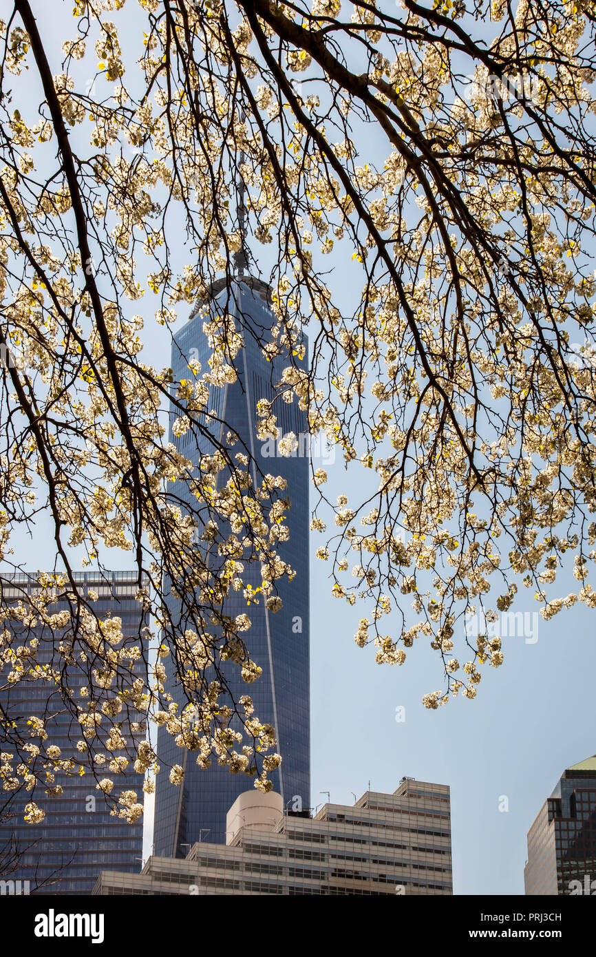 NEW YORK, NY - APRIL 22:  One World Trade Center building with blooming tree view from Greenwich street  on April 22, 2015 in New York City. - Stock Image