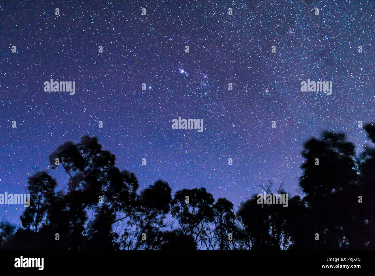 """Orion setting in deep twilight sky with stars in abundance but the sky still deep blue, from Australia with Orion """"upside down."""" The Saucepan asterism - Stock Image"""