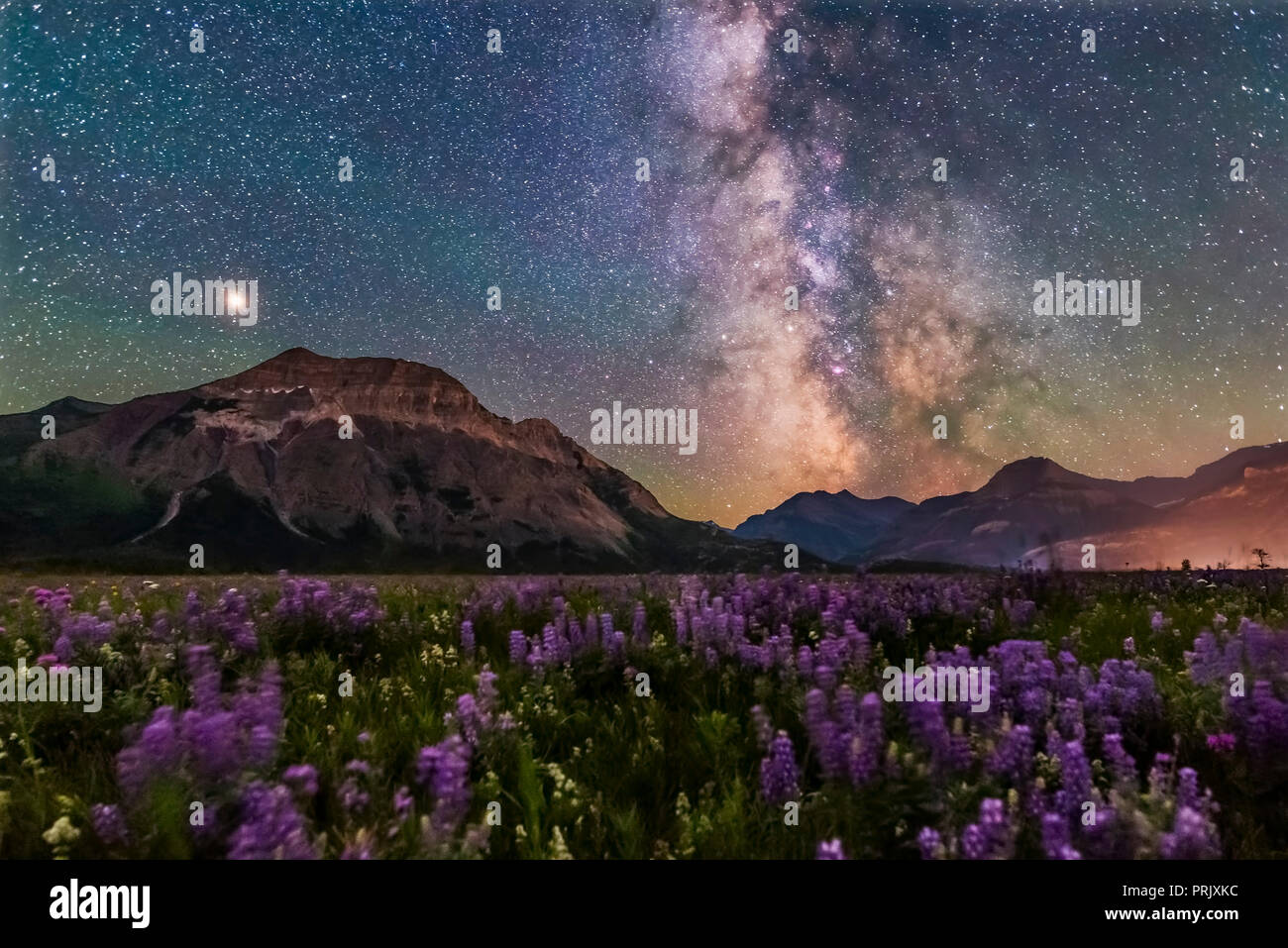 A flower-filled meadow at the Hay Barn Road at Waterton Lakes National Park, Alberta, with the summer Milky Way and Mars to the south over Waterton Va - Stock Image