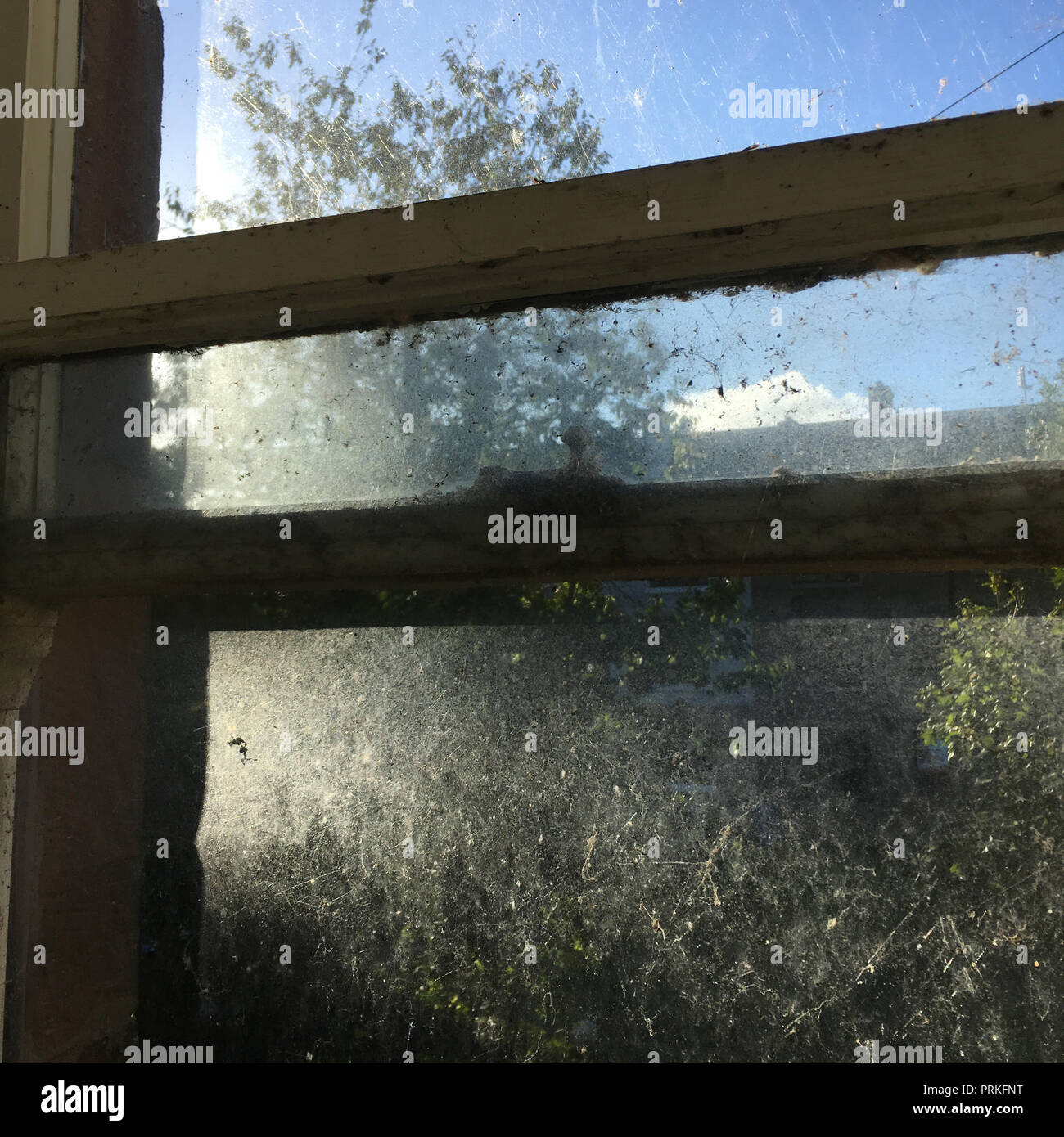 Spiders web and window, in Glasgow, Scotland. - Stock Image