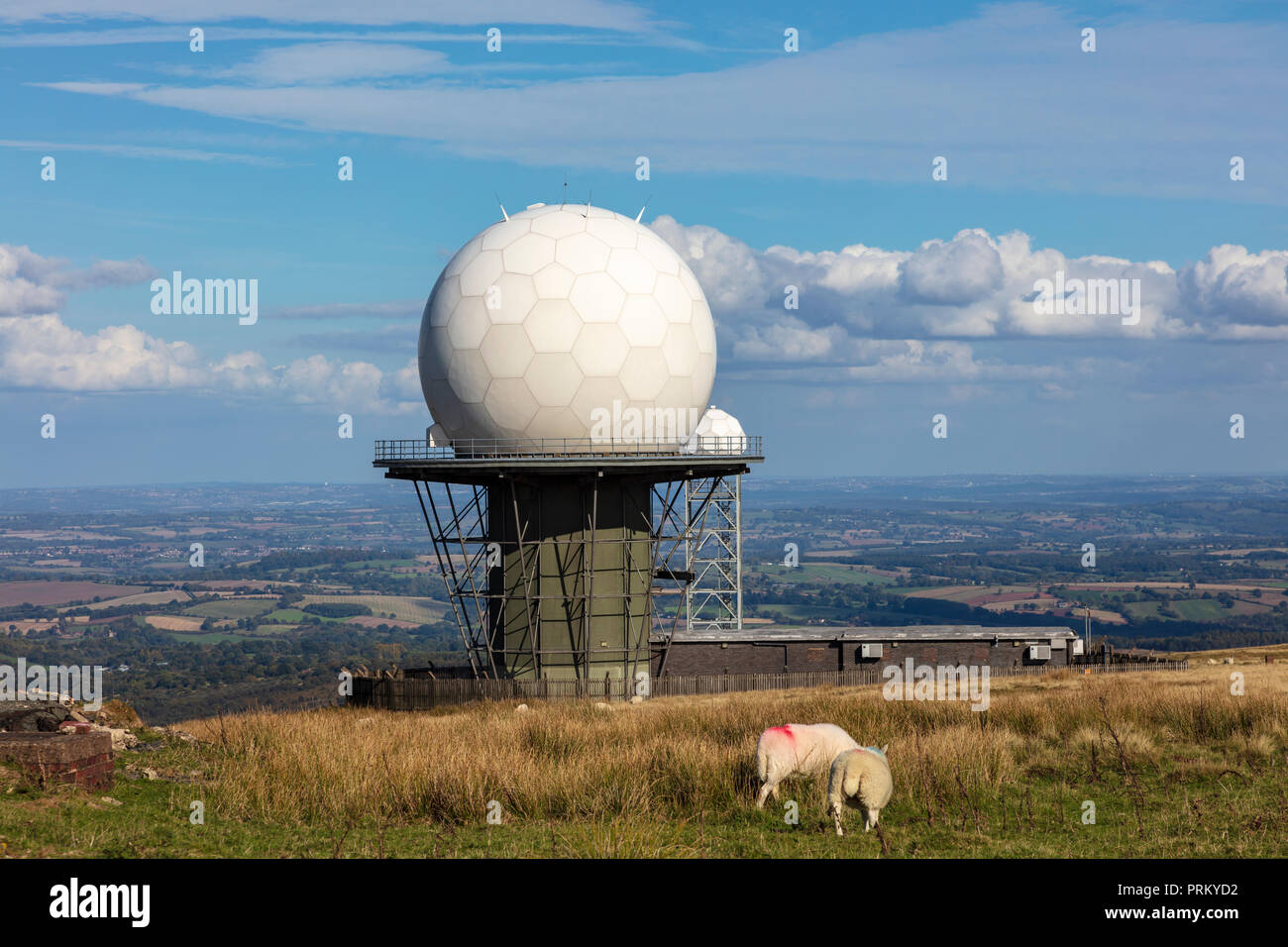 A Sheep Stands at the top of Titterstone Clee Hill with a Golfball from the nearby Radar station, Near Ludlow, Shropshire, UK - Stock Image