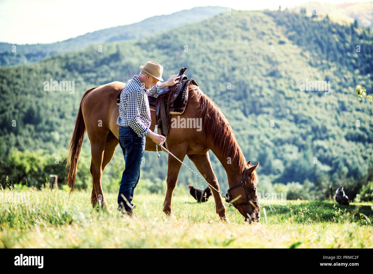 A Senior Man Holding A Horse By His Lead On A Pasture Stock Photo Alamy