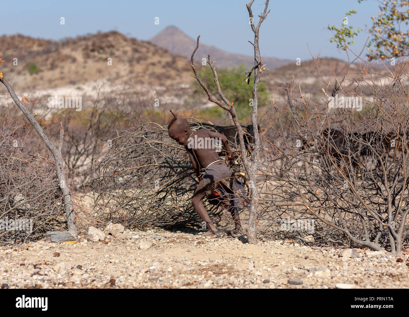 Himba tribe boy putting a fence for the cattle, Cunene Province, Oncocua, Angola - Stock Image