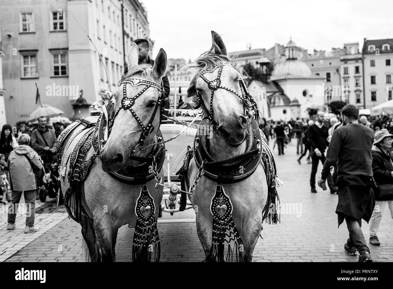 A pair of horses carrying a coach with a couple soon to be married at the city market square - Stock Image