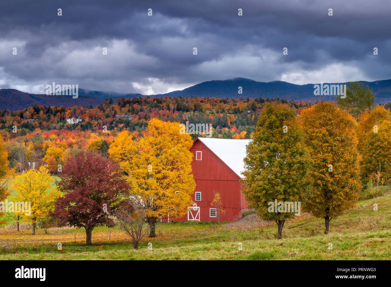 Fall foliage surrounding red barn near Stowe, Vermont, USA - Stock Image