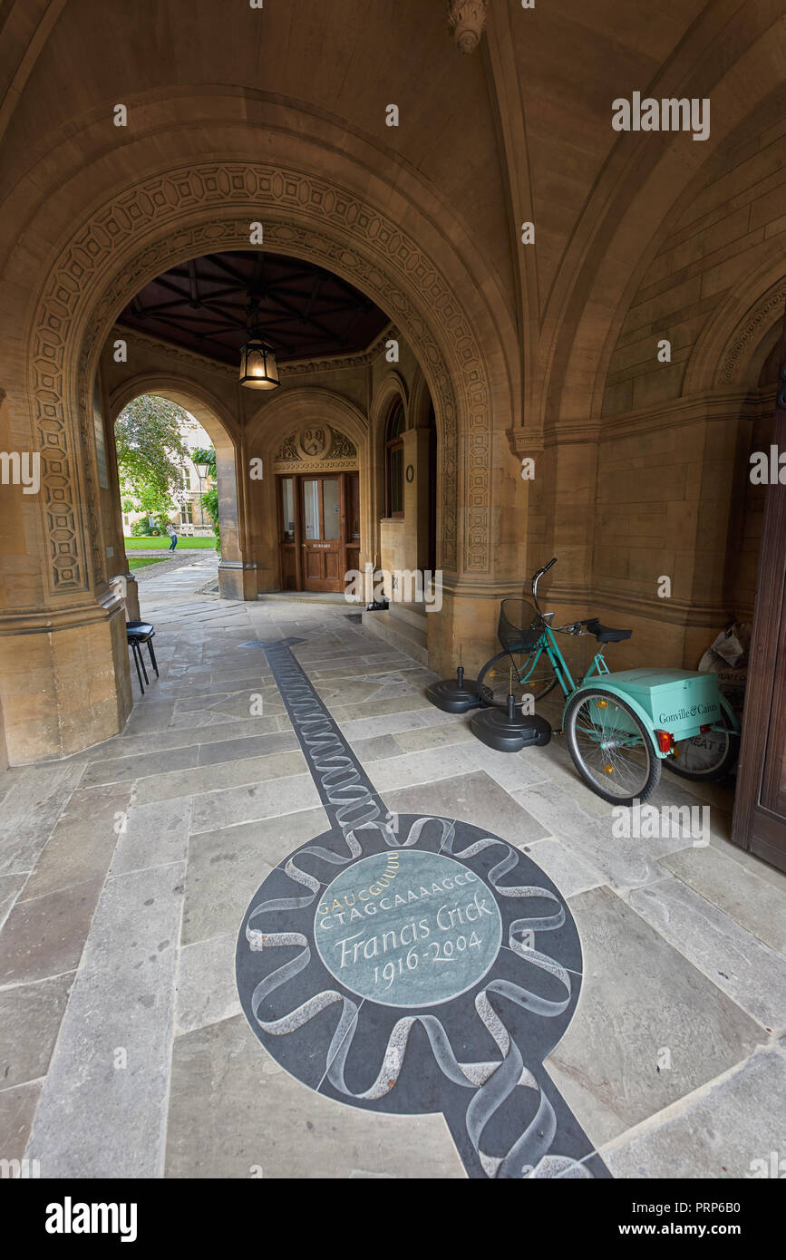 Memorial to Francis Crick (who, with Watson, discovered the helix heart of DNA) on the floor of Conville & Caius college at the university of Cambridg - Stock Image