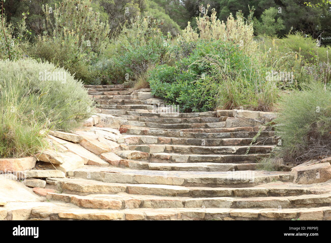Broad cascading steps, with mosaics on the landings, leading to the Acacia garden with native acacias in the Western Australian Botanic Garden, Perth. - Stock Image