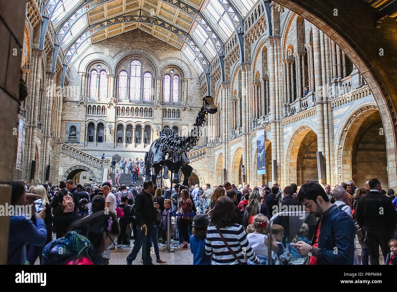 Natural History Museum, London. - Stock Image