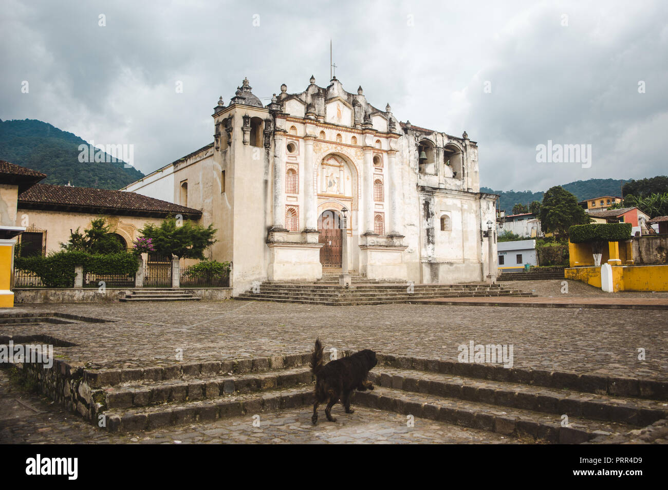 Stray dog walks up steps to a church in the main plaza of the small town of San Juan del Obispo, just outside Antigua, Guatemala Stock Photo