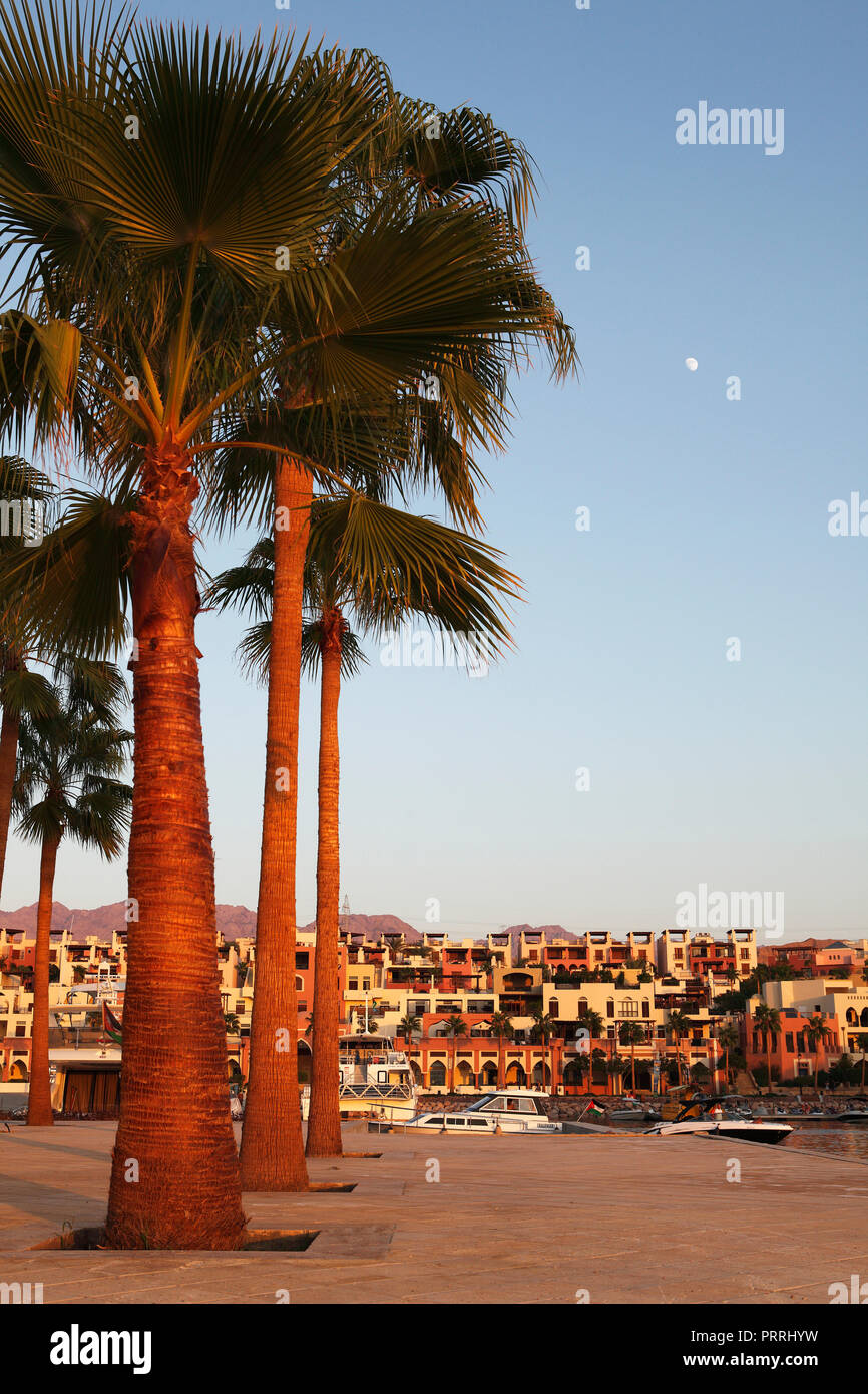 Palm trees at the harbour, Marina Tala Bay, Aqaba, Jordan - Stock Image