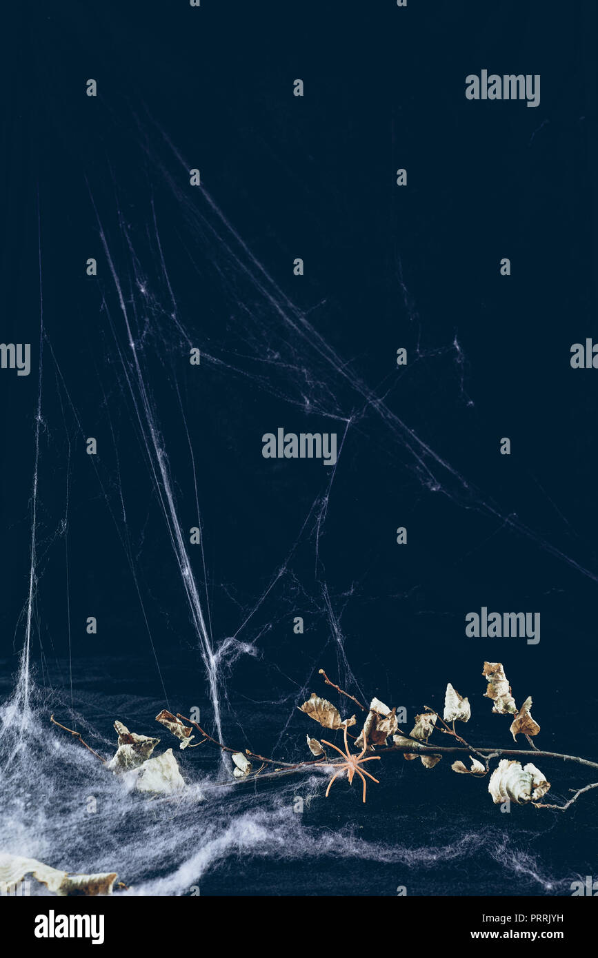 dry branch in spider web in darkness, halloween background - Stock Image