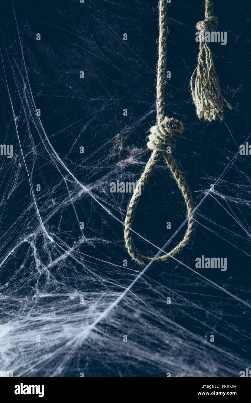hangman noose hanging in darkness with spider web, creepy halloween decor - Stock Image