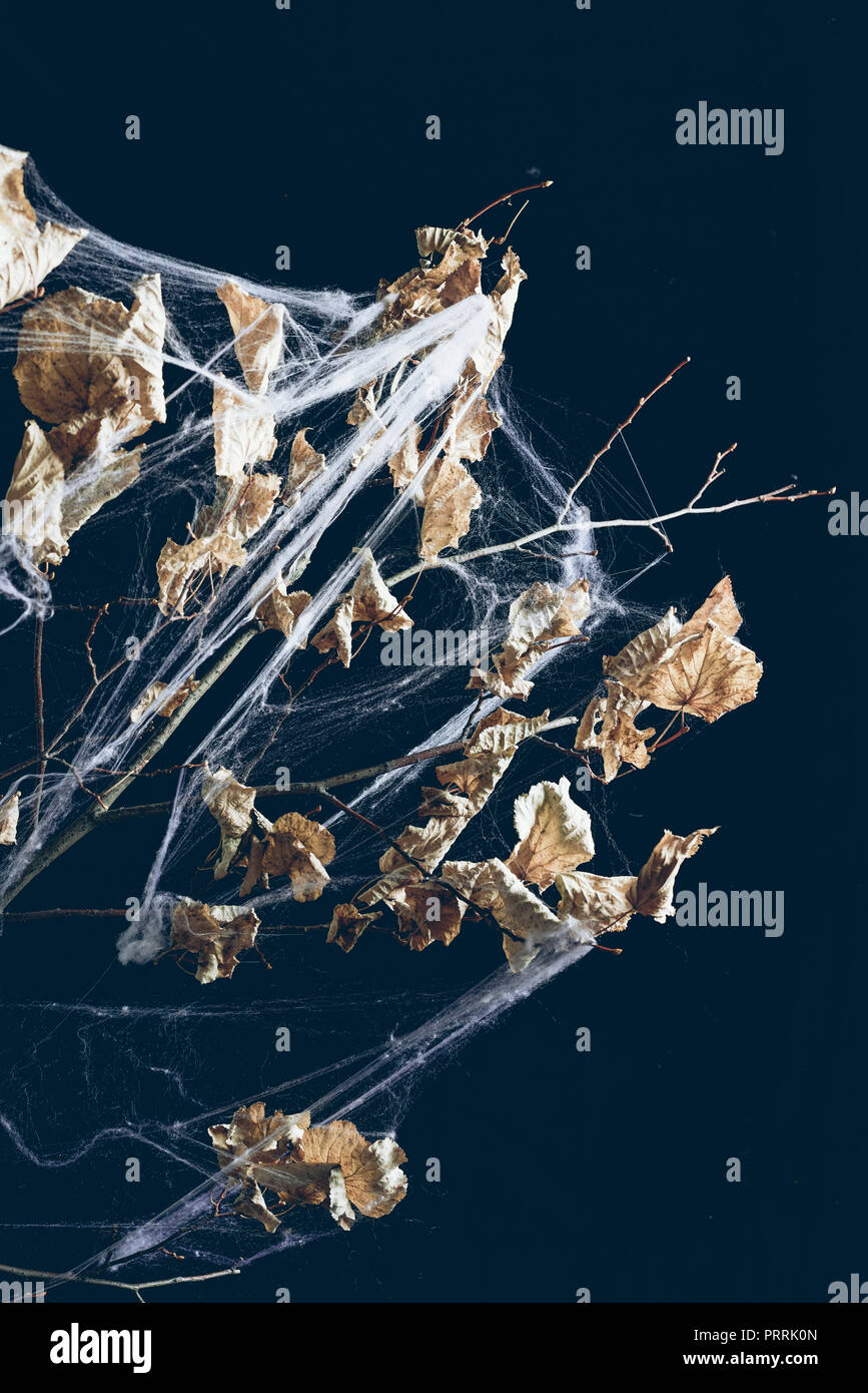 dry branch with leaves in spider web in darkness, halloween decor - Stock Image