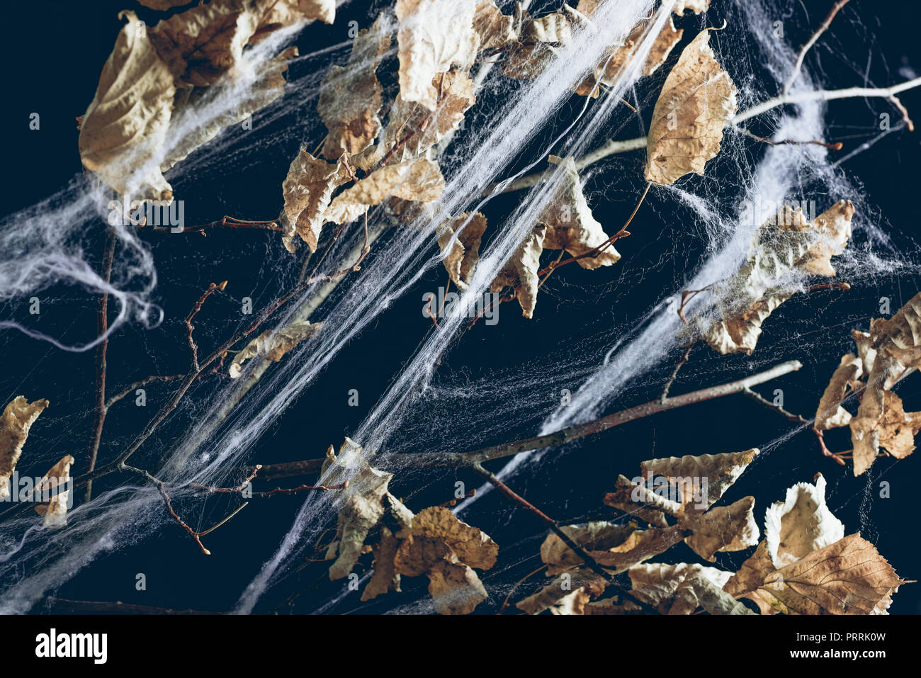 dry branch with leaves in spider web in darkness, halloween texture - Stock Image