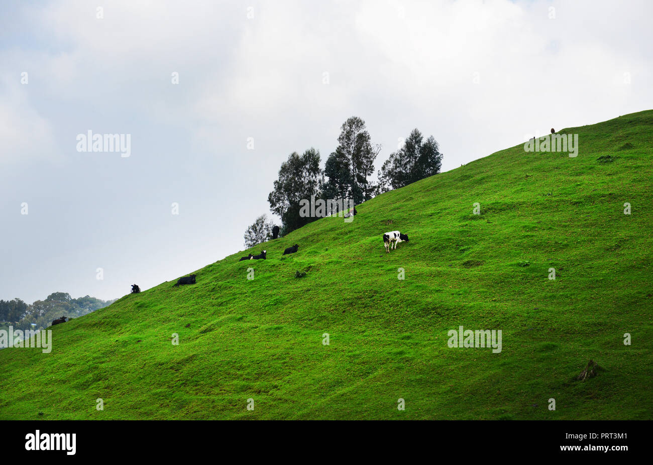 Rural landscapes in western Rwanda. - Stock Image