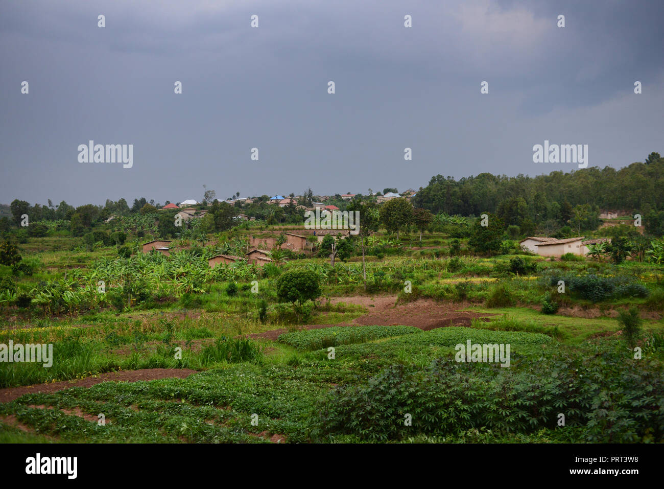 Vegetables cultivation in rural Rwanda. - Stock Image