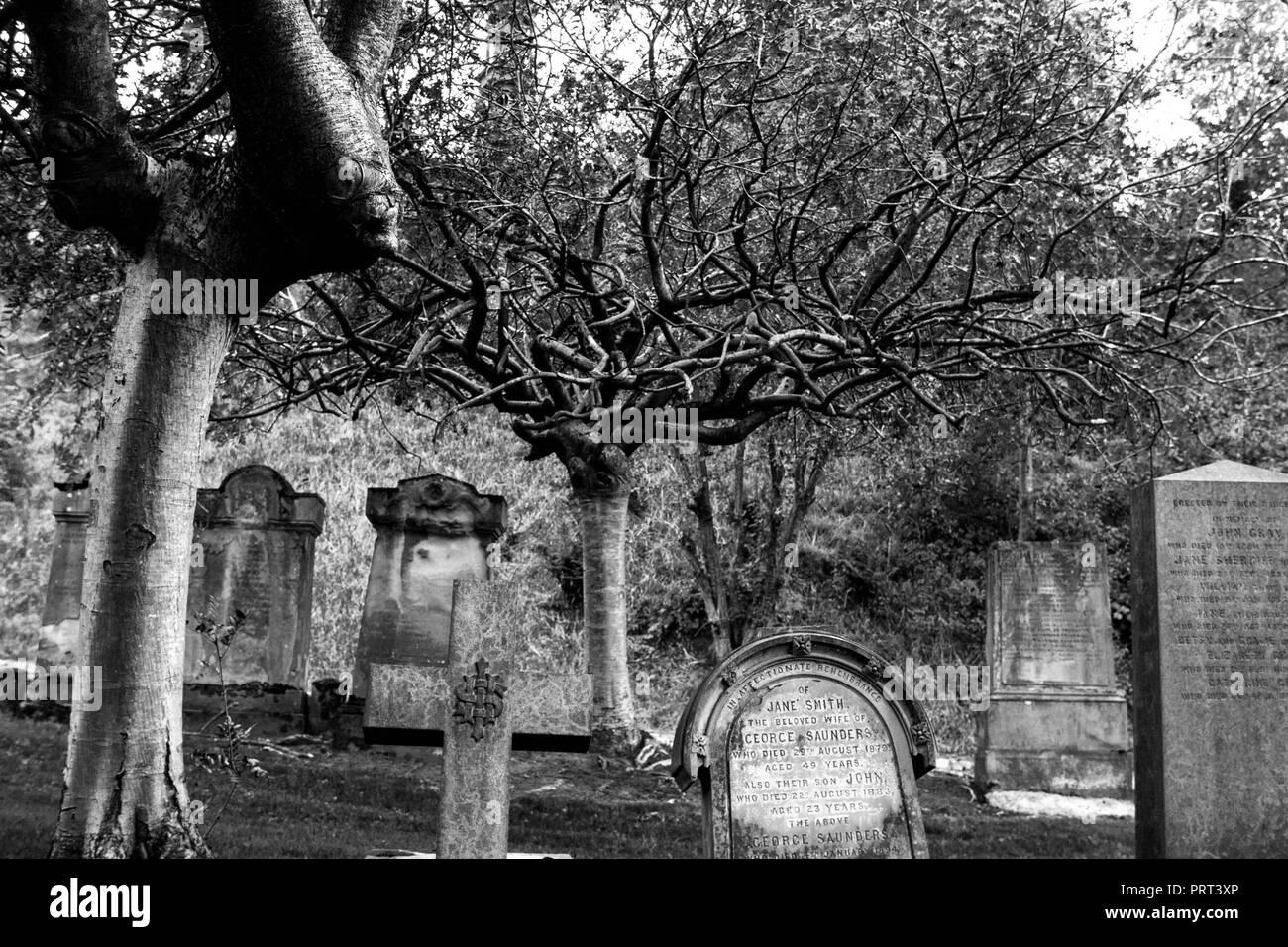 Spooky tree Stock Photo