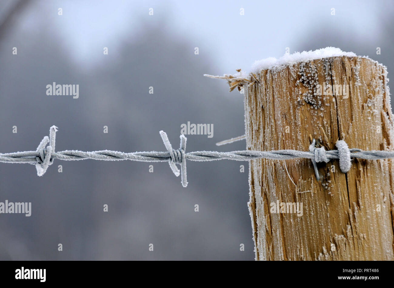 A Sharp Frost - Stock Image
