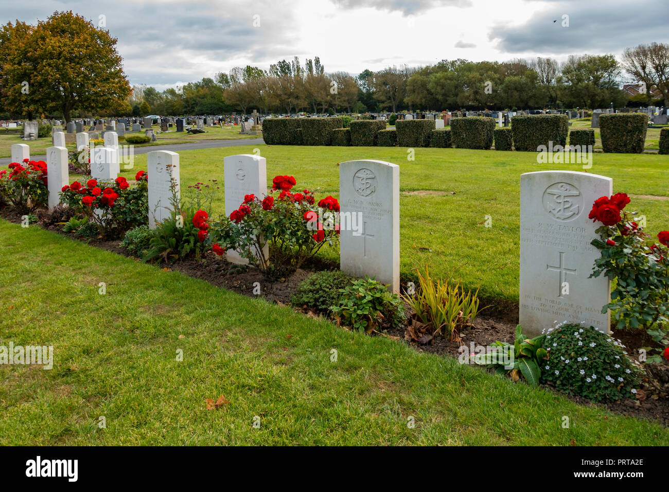 A fine show of red roses along a row of  war graves of servicemen and merchant mariners killed in World War 2 and buried in Acklam cemetary Middlesbro Stock Photo