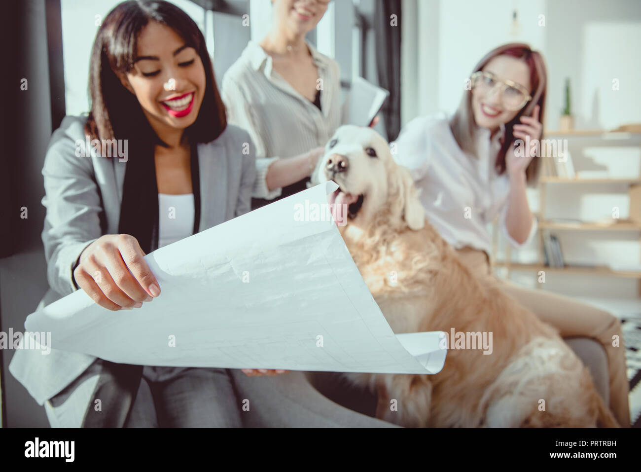 young multiethnic businesswomen in formal wear showing blueprint to dog at office - Stock Image