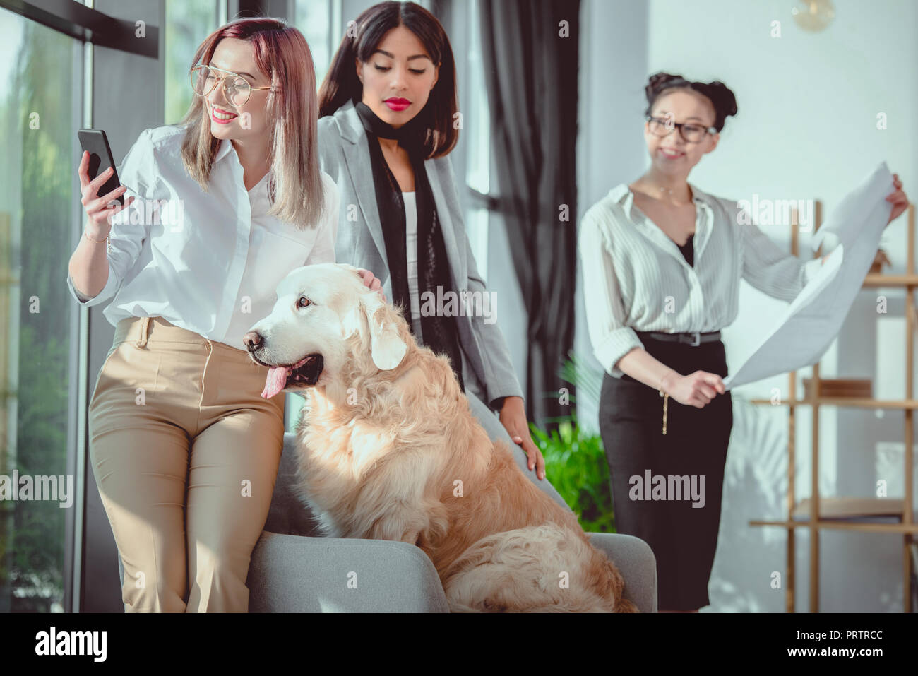 young multiethnic businesswomen in formal wear with dog working at office - Stock Image