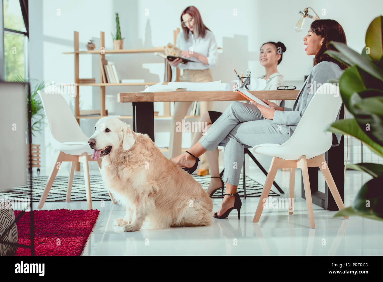young multiethnic women in formal wear with dog working at office - Stock Image