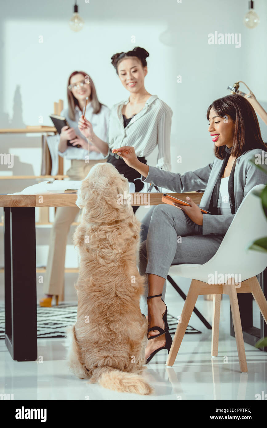 young multiethnic women in formal wear working with dog at office - Stock Image