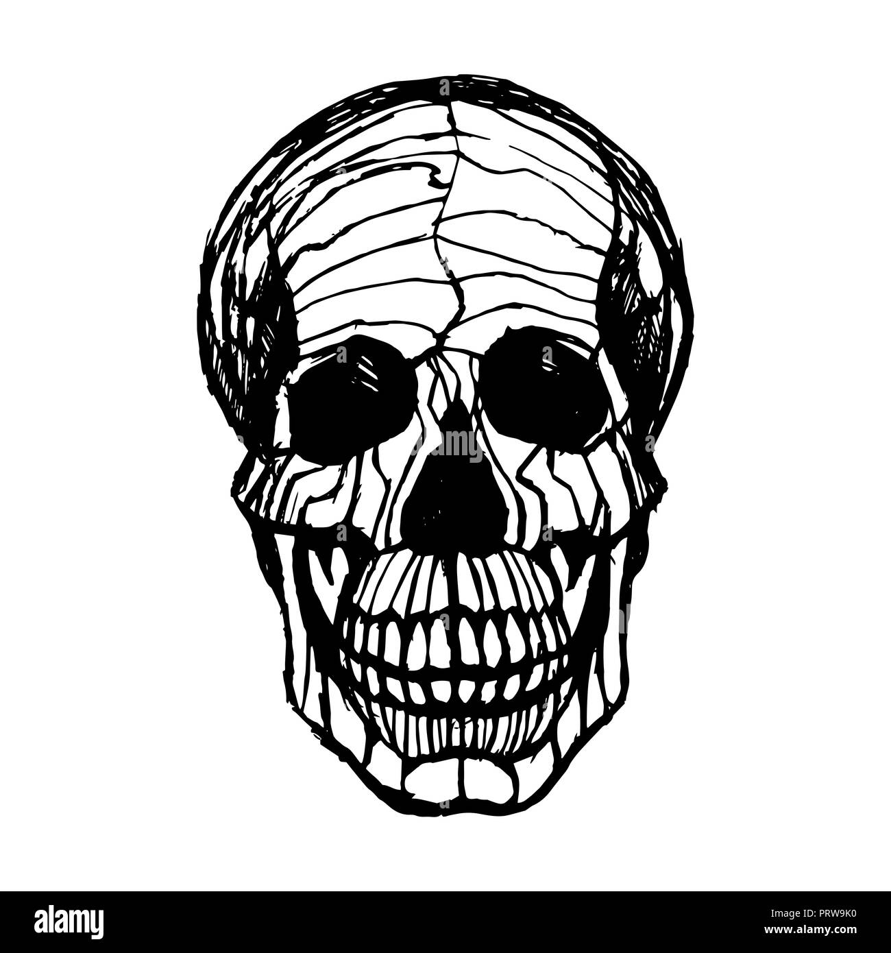 black and white illustration of human skull with a lower jaw in ink hand drawn style. Stock Photo