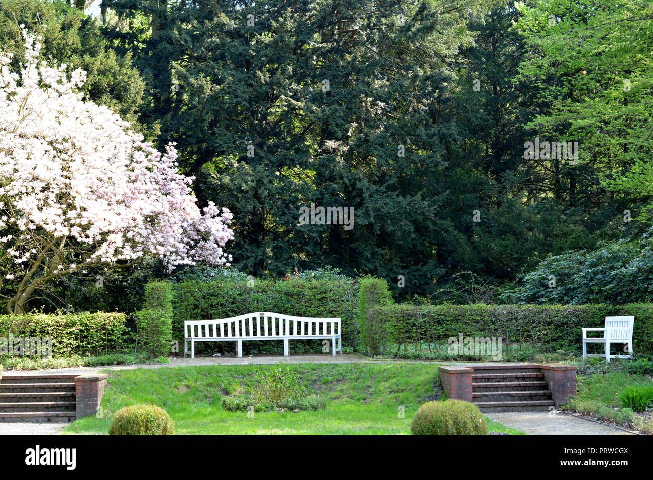 Magnolien ParkMagnolie    Park Stock Photo
